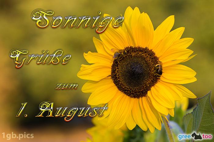 Sonnenblume Bienen Zum 1 August Bild - 1gb.pics