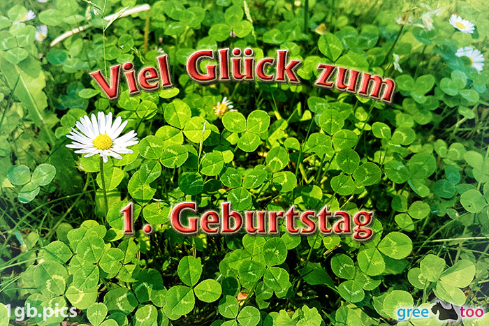 Klee Gaensebluemchen Viel Glueck Zum 1 Geburtstag Bild - 1gb.pics