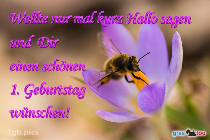 Krokus Biene Einen Schoenen 1 Geburtstag Bild - 1gb.pics