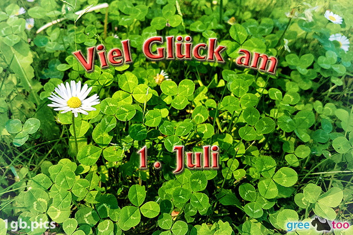 Klee Gaensebluemchen Viel Glueck Am 1 Juli Bild - 1gb.pics
