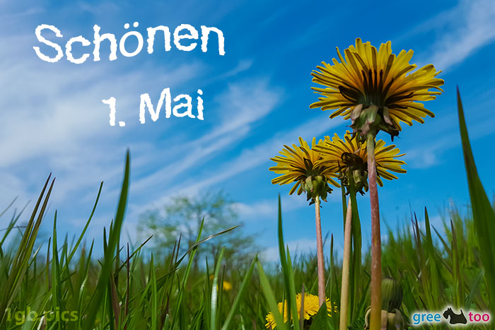 Loewenzahn Himmel Schoenen 1 Mai Bild - 1gb.pics