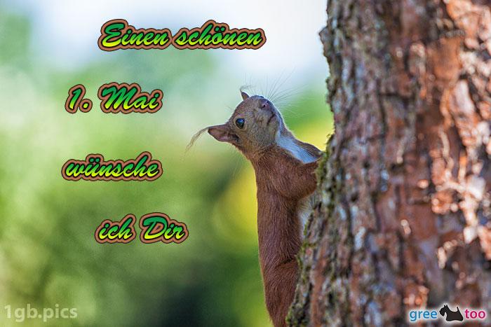 Eichhoernchen Einen Schoenen 1 Mai Bild - 1gb.pics