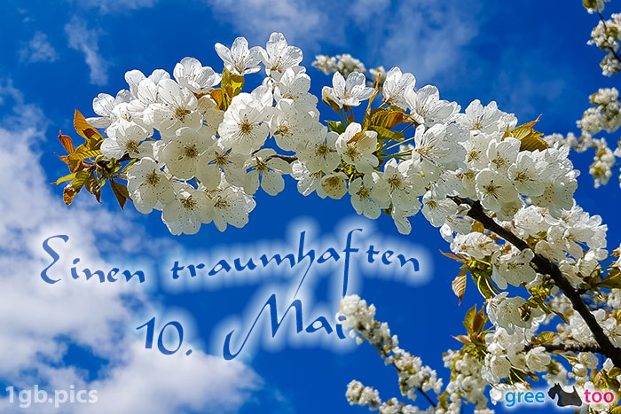 Kirschblueten Einen Traumhaften 10 Mai Bild - 1gb.pics