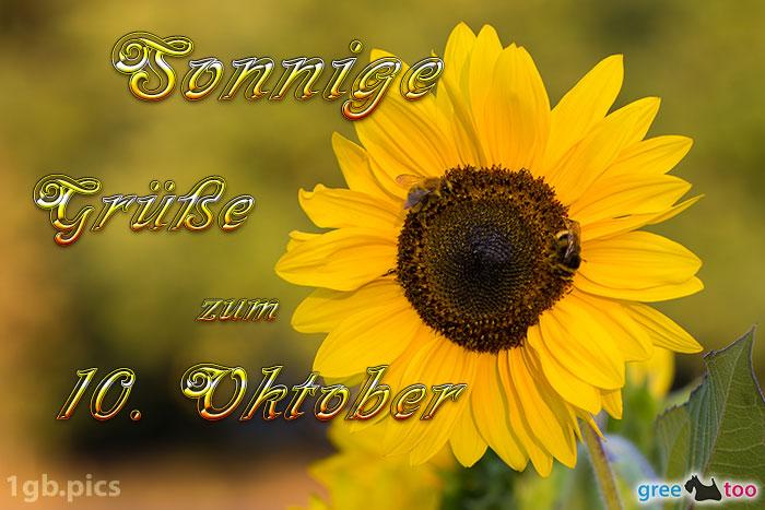 Sonnenblume Bienen Zum 10 Oktober Bild - 1gb.pics