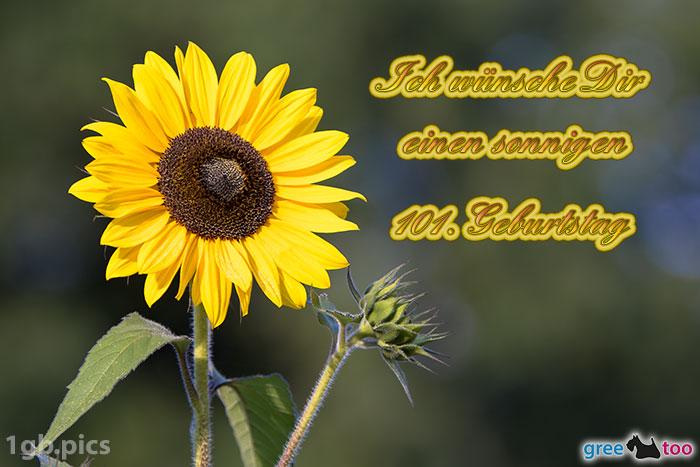Sonnenblume Einen Sonnigen 101 Geburtstag Bild - 1gb.pics