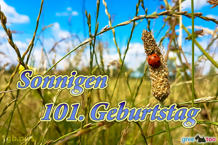 Marienkaefer Sonnigen 101 Geburtstag Bild - 1gb.pics