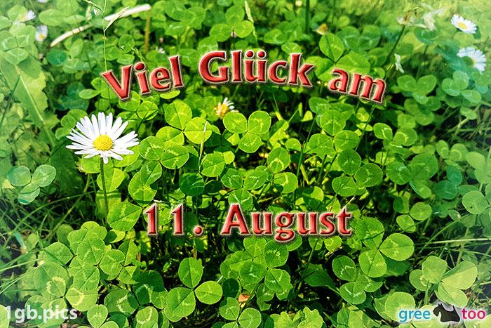 Klee Gaensebluemchen Viel Glueck Am 11 August Bild - 1gb.pics