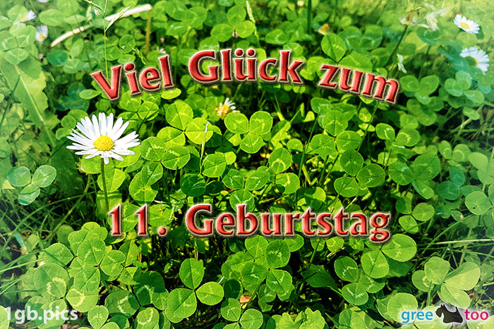 Klee Gaensebluemchen Viel Glueck Zum 11 Geburtstag Bild - 1gb.pics