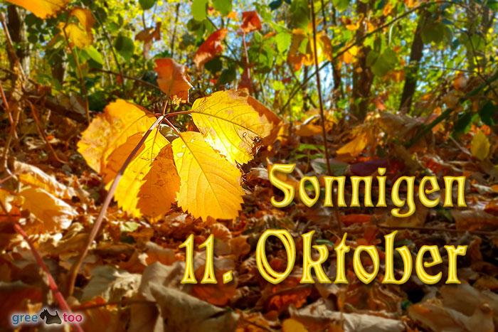 Sonnigen 11 Oktober Bild - 1gb.pics