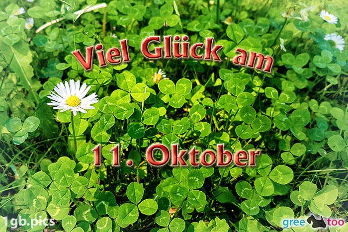 Klee Gaensebluemchen Viel Glueck Am 11 Oktober Bild - 1gb.pics