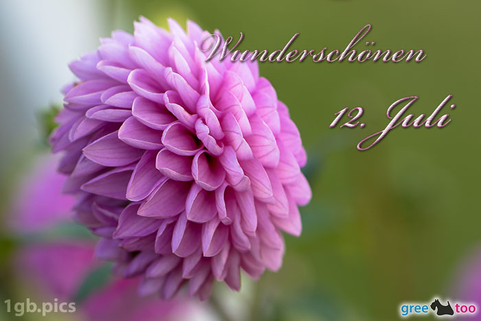 Lila Dahlie Wunderschoenen 12 Juli Bild - 1gb.pics