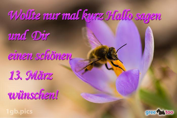 Krokus Biene Einen Schoenen 13 Maerz Bild - 1gb.pics
