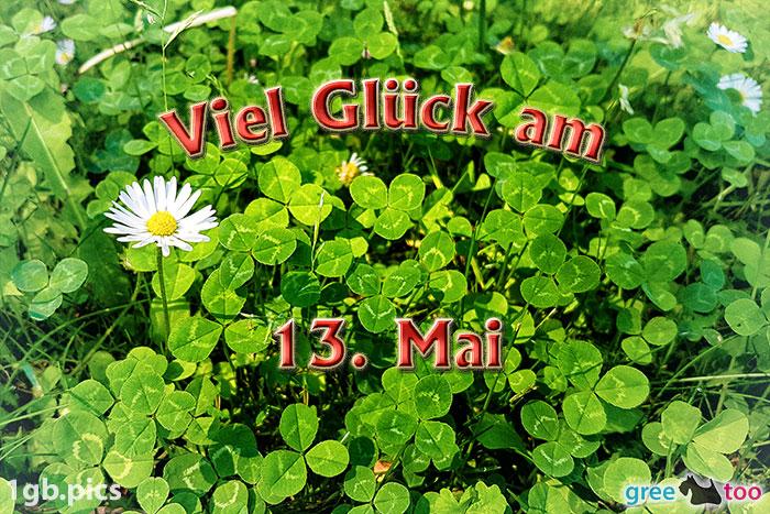 Klee Gaensebluemchen Viel Glueck Am 13 Mai Bild - 1gb.pics