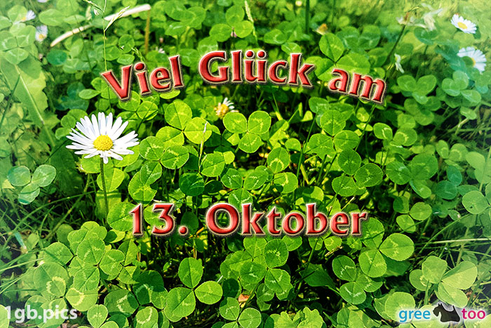 Klee Gaensebluemchen Viel Glueck Am 13 Oktober Bild - 1gb.pics