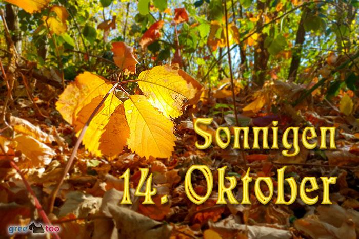 Sonnigen 14 Oktober Bild - 1gb.pics
