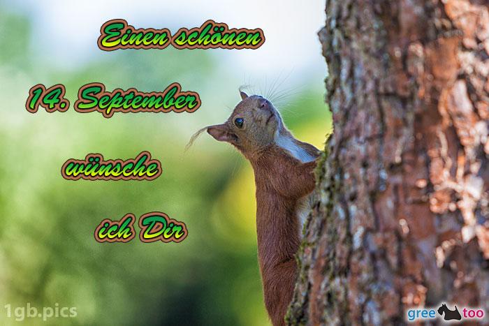 Eichhoernchen Einen Schoenen 14 September Bild - 1gb.pics