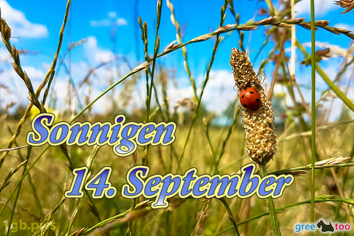 Marienkaefer Sonnigen 14 September Bild - 1gb.pics