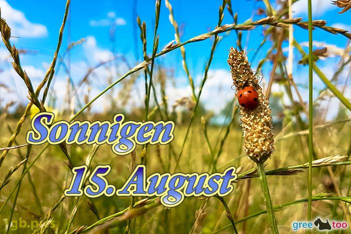 Marienkaefer Sonnigen 15 August Bild - 1gb.pics
