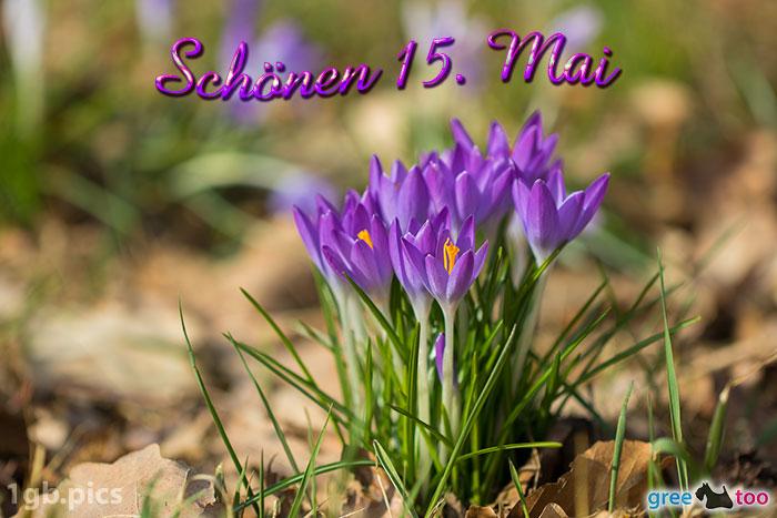 Krokusstaude Schoenen 15 Mai Bild - 1gb.pics