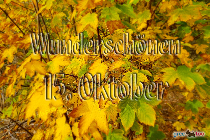 Wunderschoenen 15 Oktober Bild - 1gb.pics