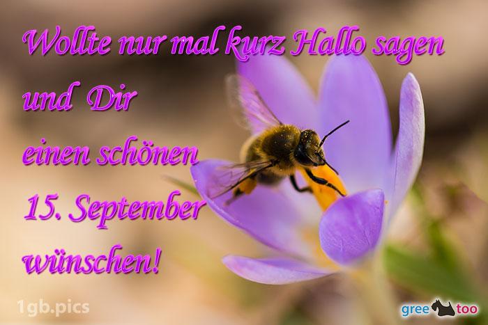 Krokus Biene Einen Schoenen 15 September Bild - 1gb.pics