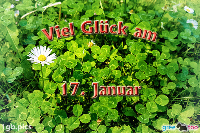 Klee Gaensebluemchen Viel Glueck Am 17 Januar Bild - 1gb.pics