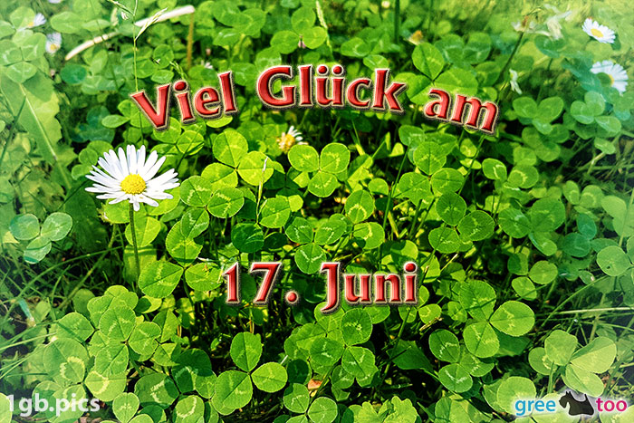 Klee Gaensebluemchen Viel Glueck Am 17 Juni Bild - 1gb.pics