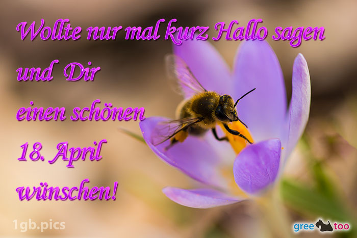 Krokus Biene Einen Schoenen 18 April Bild - 1gb.pics
