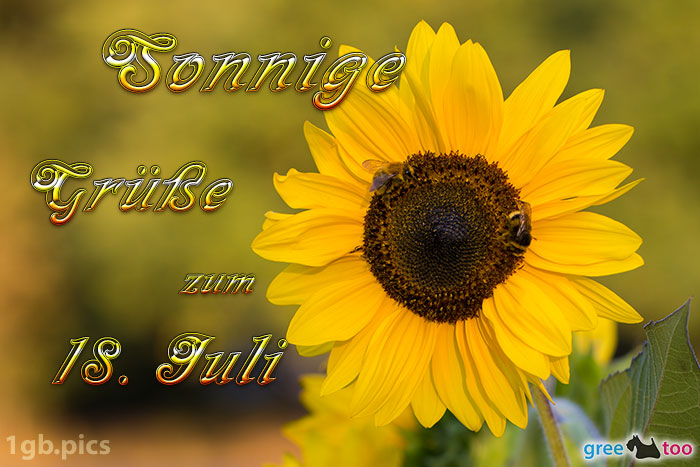 Sonnenblume Bienen Zum 18 Juli Bild - 1gb.pics