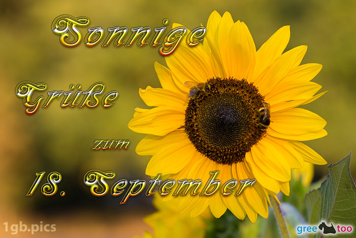 Sonnenblume Bienen Zum 18 September Bild - 1gb.pics