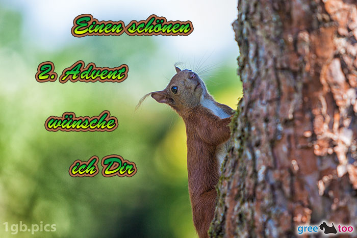 Eichhoernchen Einen Schoenen 2 Advent Bild - 1gb.pics