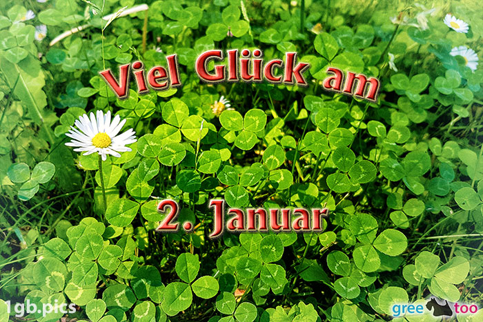 Klee Gaensebluemchen Viel Glueck Am 2 Januar Bild - 1gb.pics