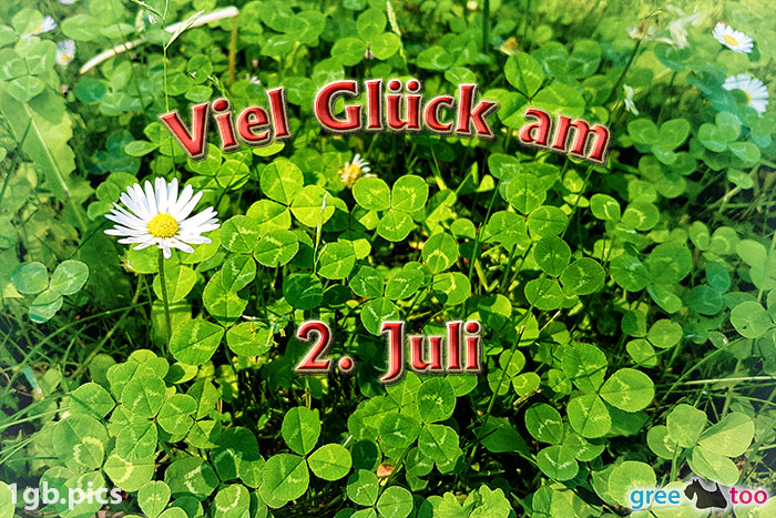 Klee Gaensebluemchen Viel Glueck Am 2 Juli Bild - 1gb.pics