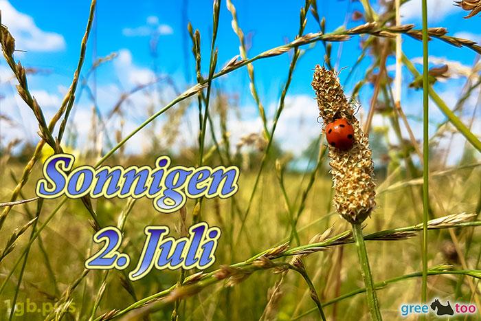 Marienkaefer Sonnigen 2 Juli Bild - 1gb.pics