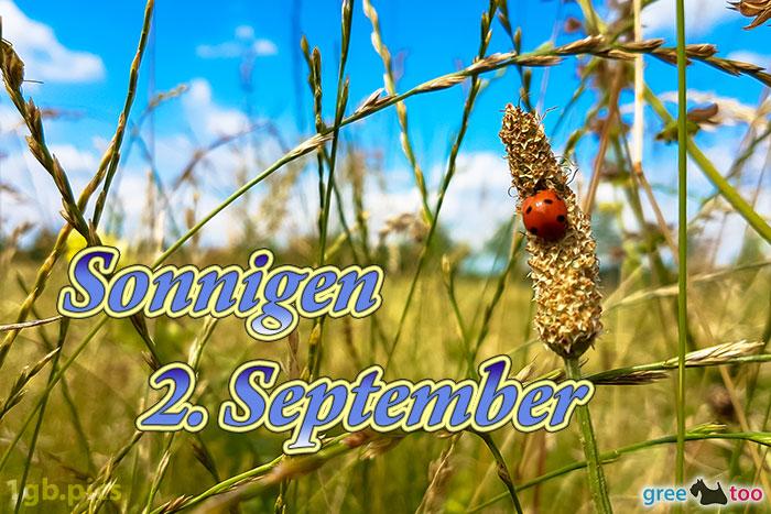 Marienkaefer Sonnigen 2 September Bild - 1gb.pics