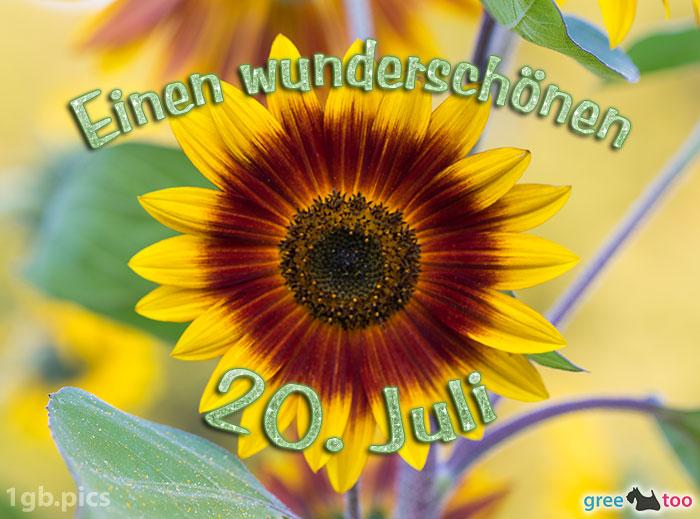 Sonnenblume Einen Wunderschoenen 20 Juli Bild - 1gb.pics