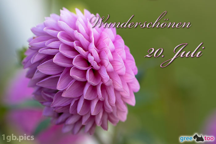 Lila Dahlie Wunderschoenen 20 Juli Bild - 1gb.pics