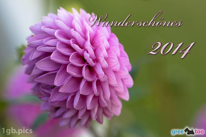 Lila Dahlie Wunderschoenes 2014 Bild - 1gb.pics