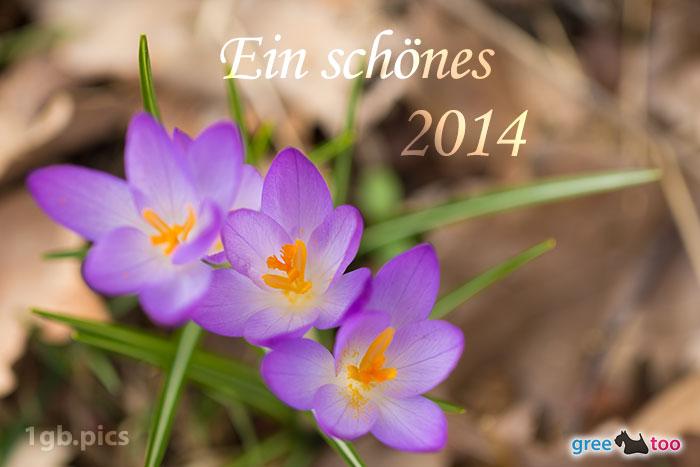 Lila Krokus Ein Schoenes 2014 Bild - 1gb.pics