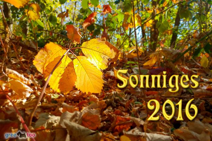 Sonniges 2016 Bild - 1gb.pics