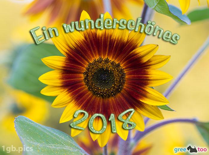 Sonnenblume Ein Wunderschoenes 2018 Bild - 1gb.pics