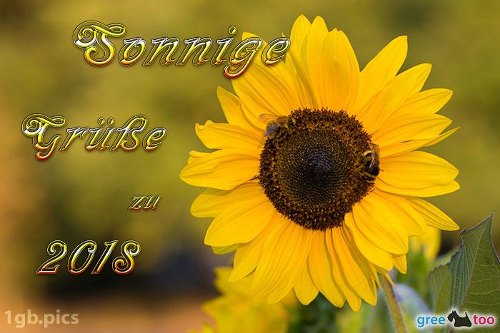 Sonnenblume Bienen Zu 2018 Bild - 1gb.pics