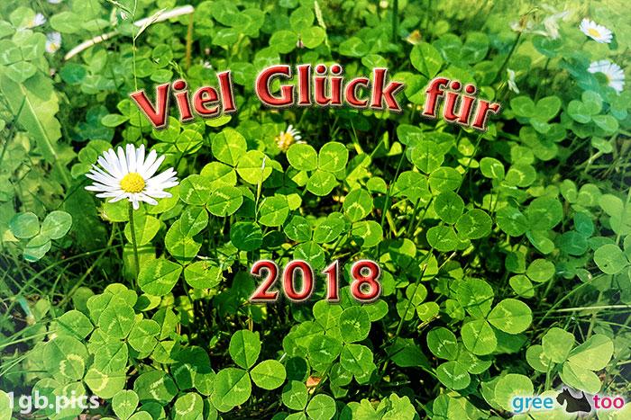 Klee Gaensebluemchen Viel Glueck Fuer 2018 Bild - 1gb.pics
