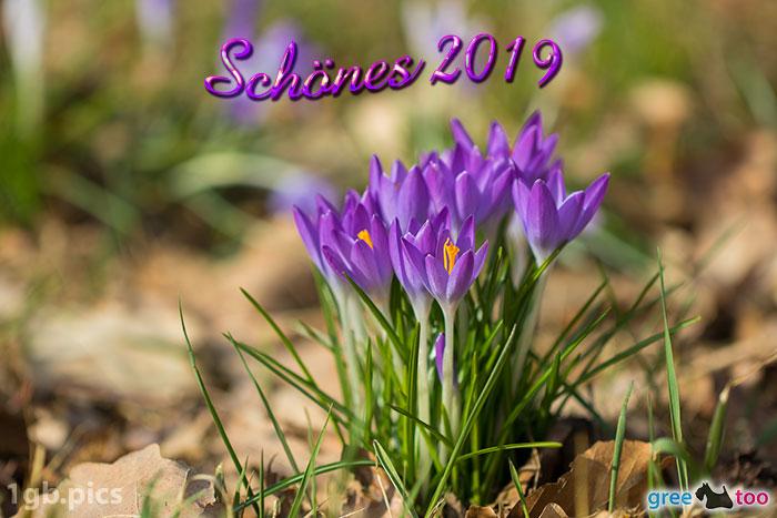 Krokusstaude Schoenes 2019 Bild - 1gb.pics