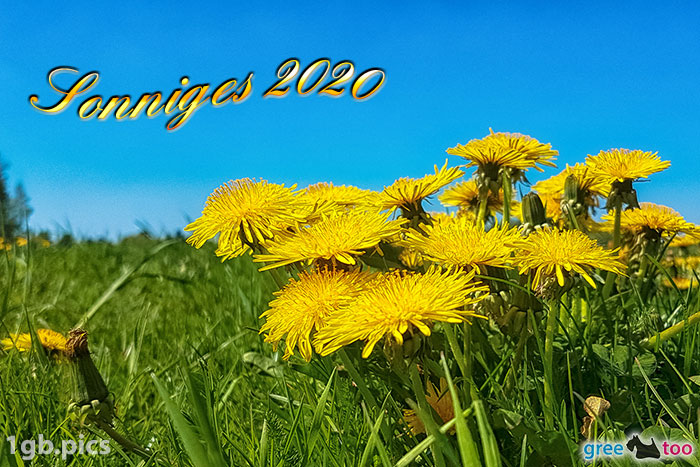 Loewenzahn Sonniges 2020 Bild - 1gb.pics