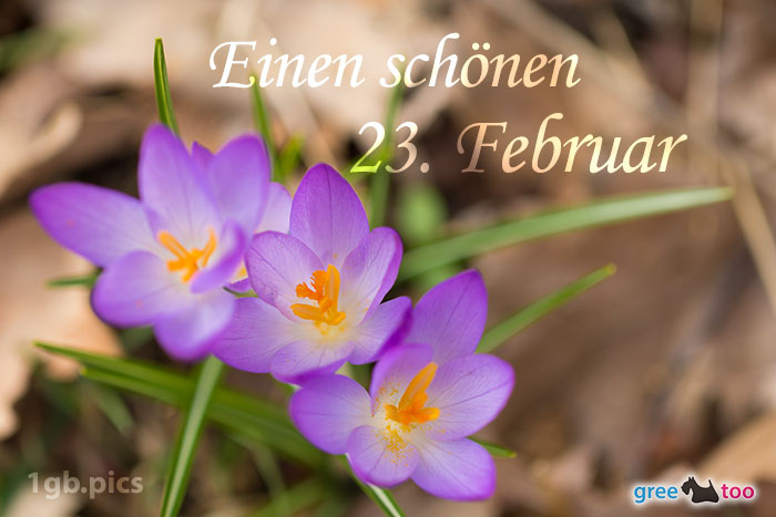 Lila Krokus Einen Schoenen 23 Februar Bild - 1gb.pics