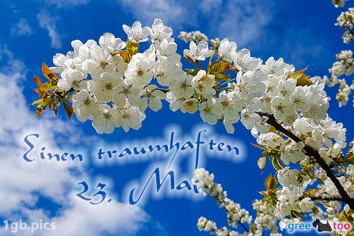 Kirschblueten Einen Traumhaften 23 Mai Bild - 1gb.pics