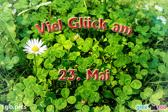 Klee Gaensebluemchen Viel Glueck Am 23 Mai Bild - 1gb.pics