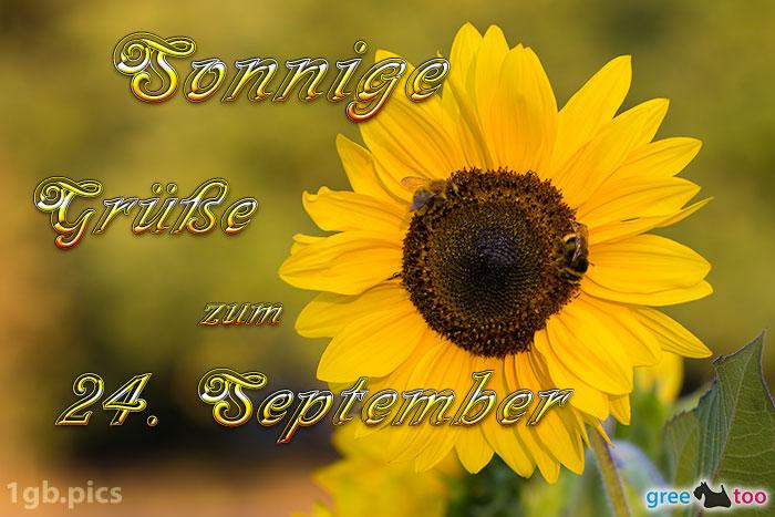 Sonnenblume Bienen Zum 24 September Bild - 1gb.pics