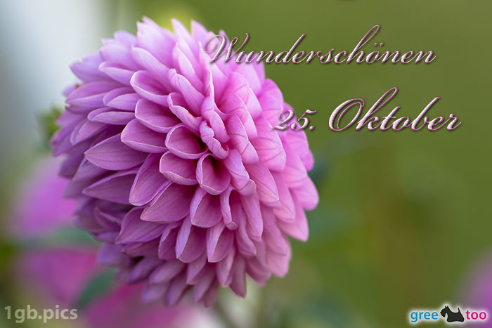 Lila Dahlie Wunderschoenen 25 Oktober Bild - 1gb.pics